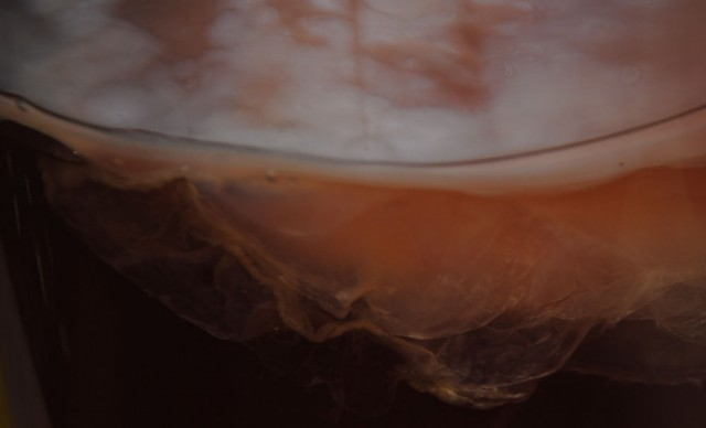My first homemade scoby!! I was thrilled at how well it turned out. ~ Laura of Potpourri of Health ~